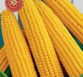 Семена кукурузы сахарной Брусница (рс) 10г (среднеспелый)