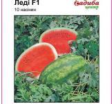 Семена арбуза Леди F1 10шт (Nunhems Голландия)