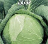 Семена капусты белокочанной Лангедейкер (пс) 1г