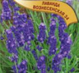 Семена Лаванда Вознесенская 34 0,05г (Гавриш)