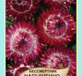 Семена Бессмертник насыщенно-красный 0,2г