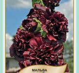 Семена Мальва Шатер темно-бордовый 0,3г (Legutko Польша)