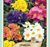 Семена Примула Белиссимо 50шт (Legutko Польша)
