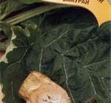 Семена лопуха японского Самурай 20шт ( ТМ Гавриш)