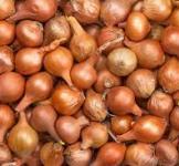 Семена лука-севка Штутгартен №2 Украина