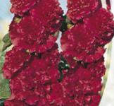 Семена Мальва махровая красная 0,3г