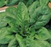 Семена шпината Матадор  3г