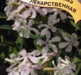 Семена мыльнянки лекарственной 0,5 г ТМ Гавриш