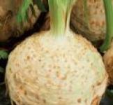 Семена сельдерея корневого Монарх 0,5г