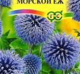 Семена Мордовник Морской еж 0,3г (Гавриш)