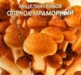Семена мицелий грибов Опенок мраморный 10шт