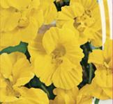Семена Настурции махровой Золотой шар 1,5г