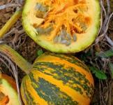 Семена тыквы голосемянной Нейкедсид 10шт. (GSN Франция)