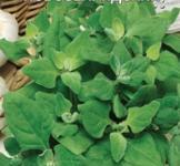 Семена шпината Новозеландский 1г