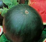 Семена арбуза Огонёк 3г