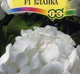 Семена  Пеларгония  Бланка F1 4шт