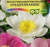 Семена Пион Молочноцветковый Очарование 3 шт