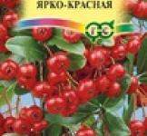 Семена Пираканта ярко-красная 5шт (Гавриш)
