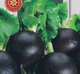 Семена редьки черная Сквирская зимняя 5г (среднеспелый)