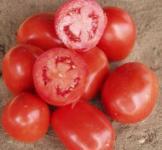 Семена томата Рио Гранде  REM Seeds - Италия 0,5кг