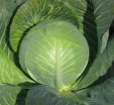 Семена капусты белокачанной Роксана F1 1000 шт