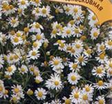 Семена ромашки аптечной Подмосковная ТМ «Гавриш» (0,05г)