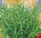 Семена Розмарин лекарственный 0,05г