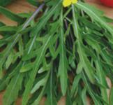 Семена рукколы Сильветта 0,3г