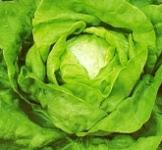 Семена салата Михалина кочанный 0,5г