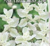 Семена Сальвии трехцветной Белый Лебедь (0,3г)