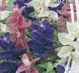 Семена Сальвии Трехцветной смесь (0,2г)