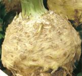 Семена сельдерея корневого Макар 0,5г