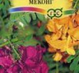 Семена Сесбания крупноцветковая Меконг 3шт (Гавриш)