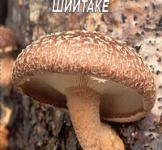Семена мицелий грибов Шиитаке 10шт