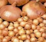 Семена лука-севка Штутти 0,25кг (Нидерланды)