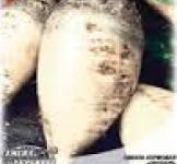 Семена свеклы кормовой Центаур Семена Украины 0,5кг