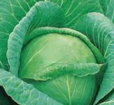 Семена капусты белокочанной Слава (сс) 1г