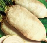 Семена свеклы кормовой Славия 0,5кг