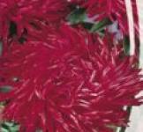 Семена  Астра  Сорель 0,25г