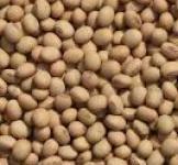 Семена сои на сидерат 1кг