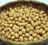 Семена сои Аннушка