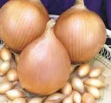 Семена лука-севка Голиат 0,25кг (Нидерланды)
