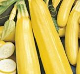 Семена кабачка Свитозар 3г