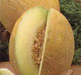 Семена дыни Титовка 2г