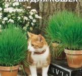 Семена травы для кошек 20г
