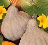 Семена тыквы Изящная 2г ( Гавриш)