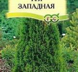 Семена Туя Западная Канди Страйп 0,05г
