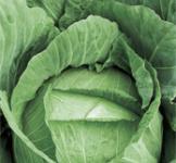 Семена капусты белокочанной Тюркиз (пс) 1г