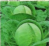 Семена капусты Тюркис 10г (Коуел Германия)