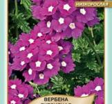 Семена Вербена Сплендор 0,1г (Legutko Польша)